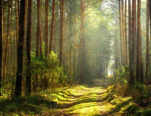 Ecologiser le comportement humain